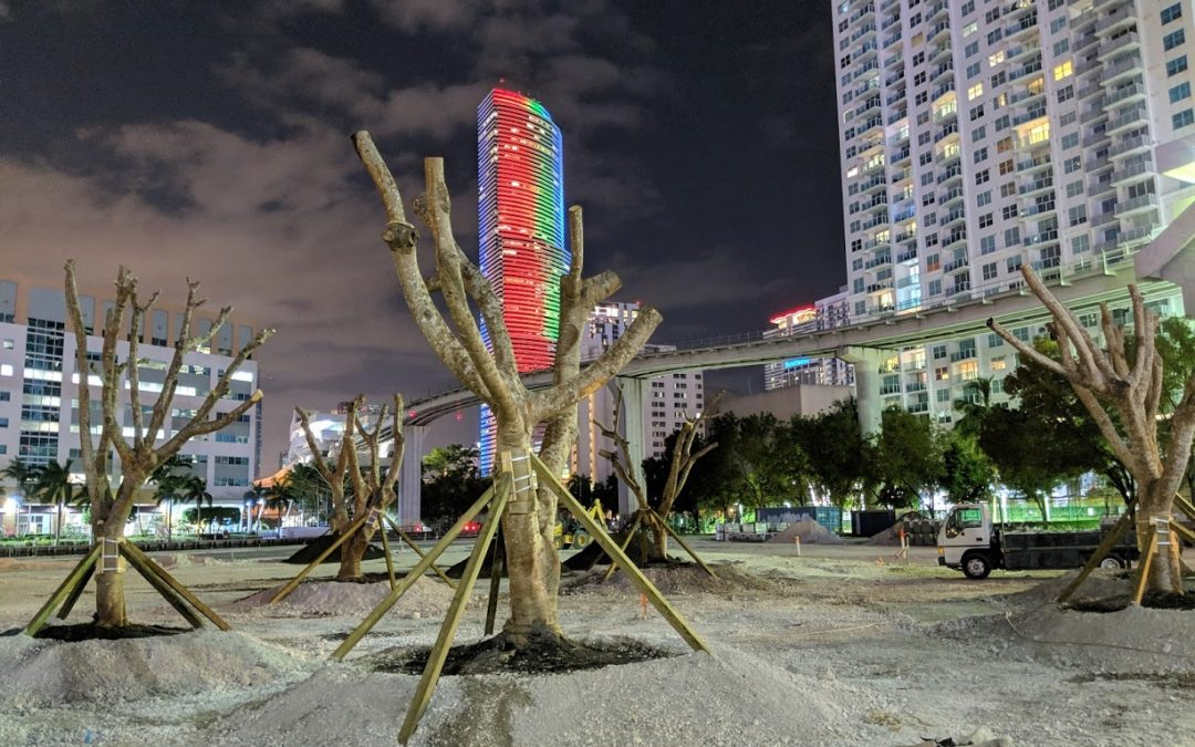 Mature Trees Planted At Riverfront Lot Next To Brickell City Centre